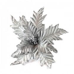 Λουλούδι Αλεξανδρινό Ασημί