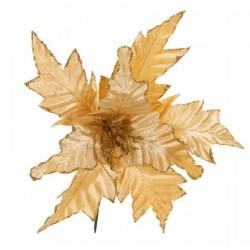 Λουλούδι Αλεξανδρινό Χρυσό